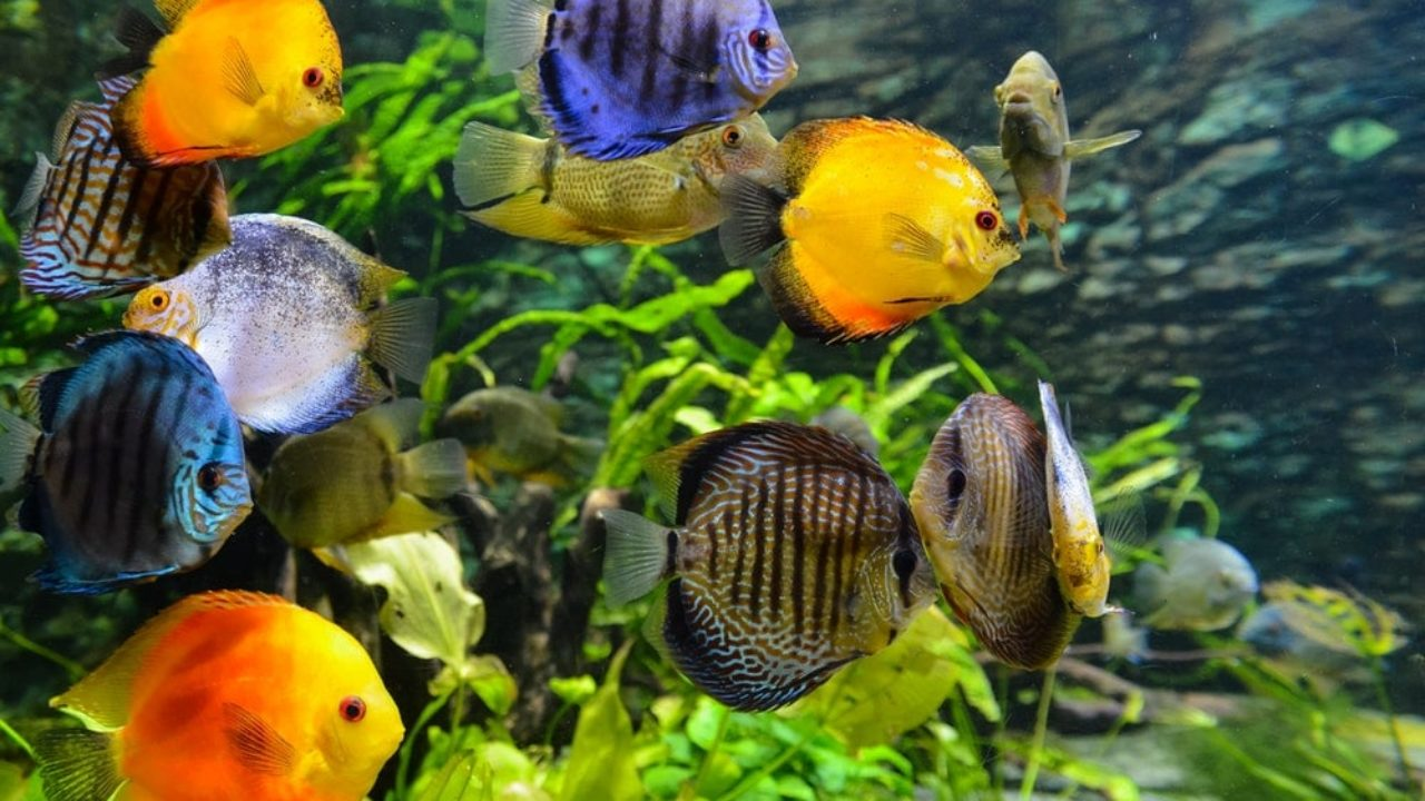 Top 25 Freshwater Aquarium Fish List