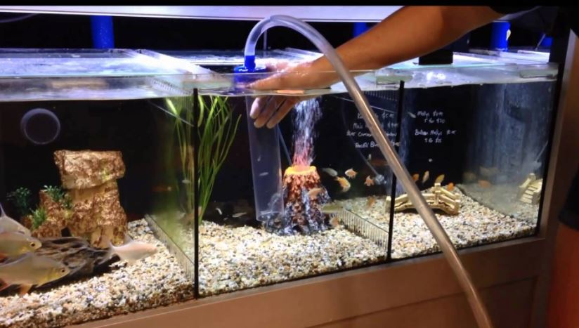 How To Clean A Fish Tank Step By Step Guide Inland Aquatics,Rotisserie Oven