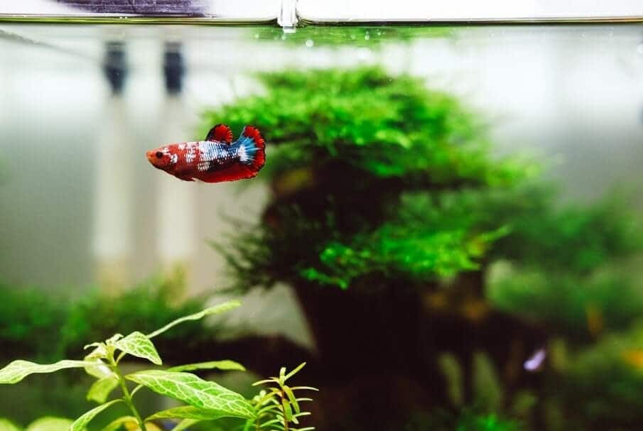 betta fish tank reviews