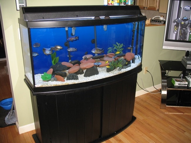 best bow front fish tanks