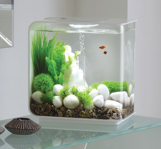 Self cleaning fish tank reviews