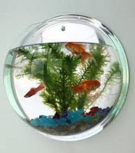 best wall mounted aquariums