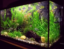 Best 55 gallon fish tank