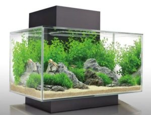 best acrylic fish tank