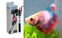 Best Heater for Betta Fish Tank