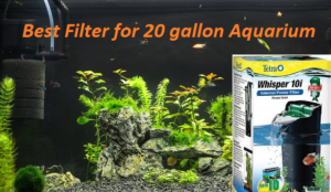 20 gallon fish tank filter