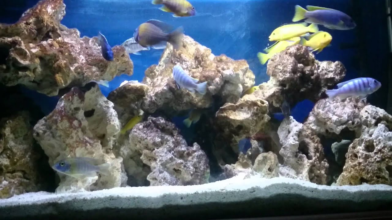 African Cichlid tank with ocean rock