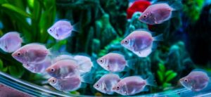 Best Fish for Beginners