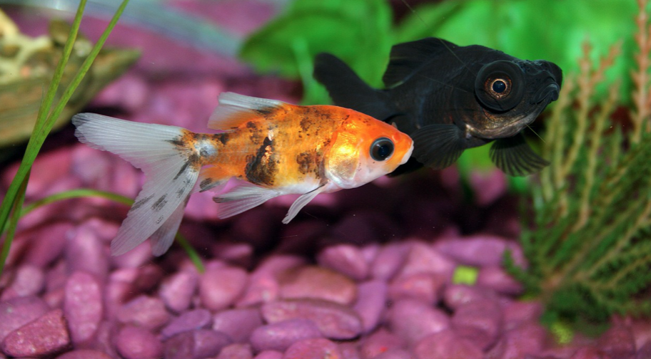 two kinds of fishes
